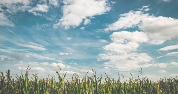 Weltglückstag – Warum Unglück nicht automatisch Unglück bedeutet